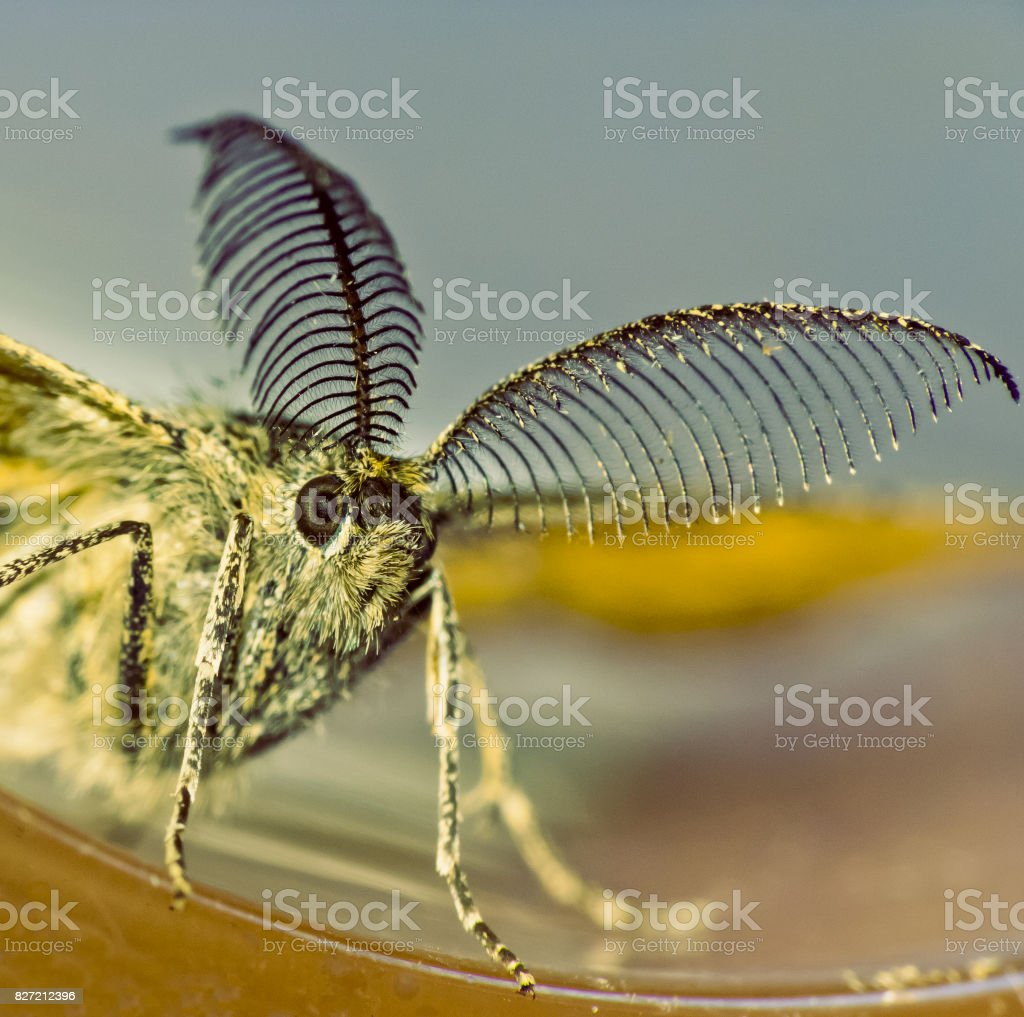 Moth  night butterfly stock photo