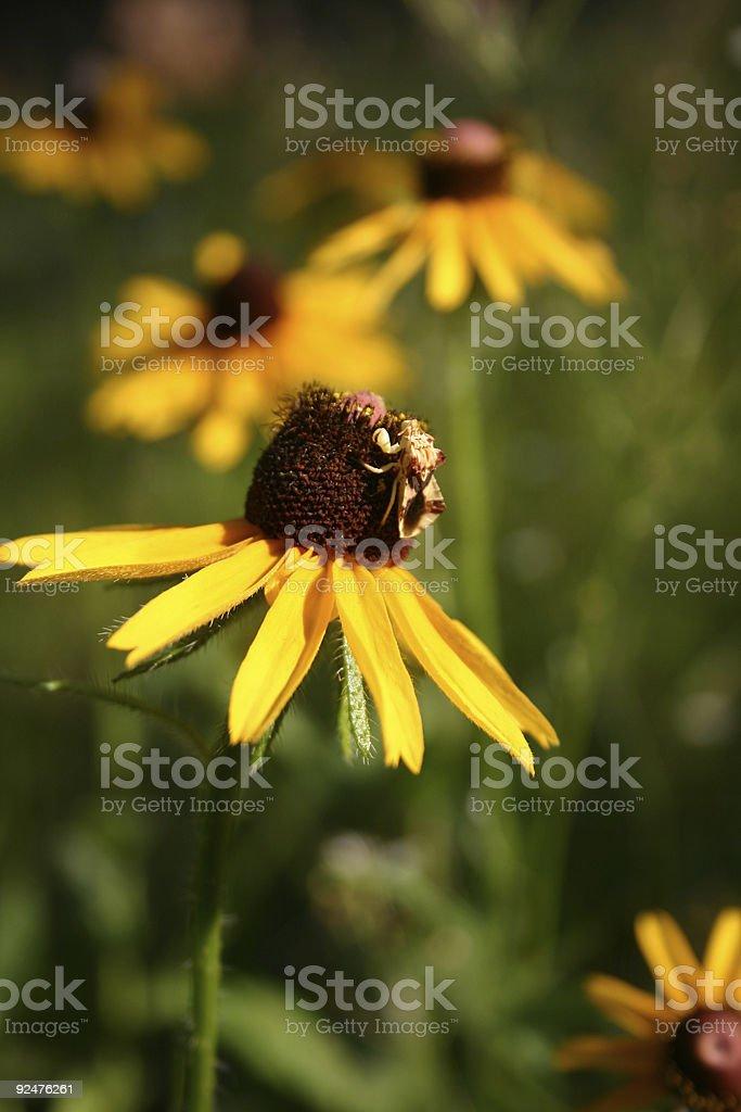 Motte auf Blume Lizenzfreies stock-foto
