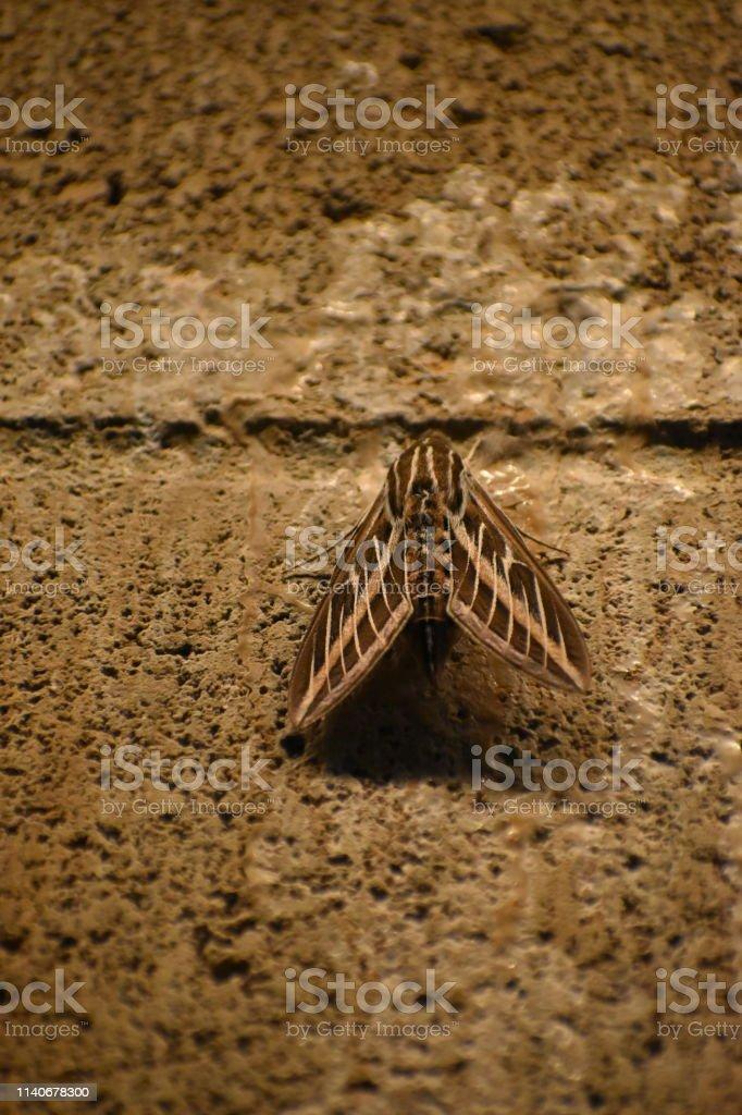 Moth on Indoor Garage Wall stock photo