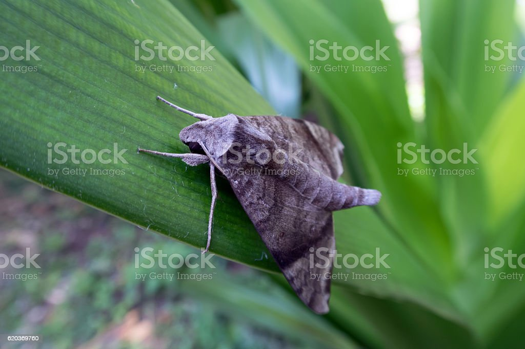 moth on Leaves foto de stock royalty-free