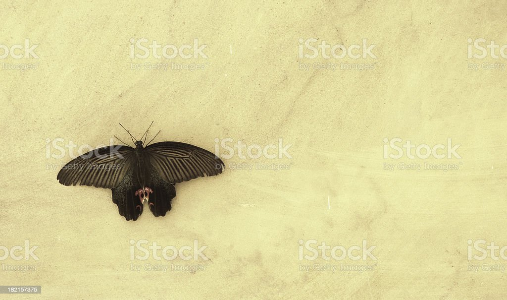 moth on marble royalty-free stock photo