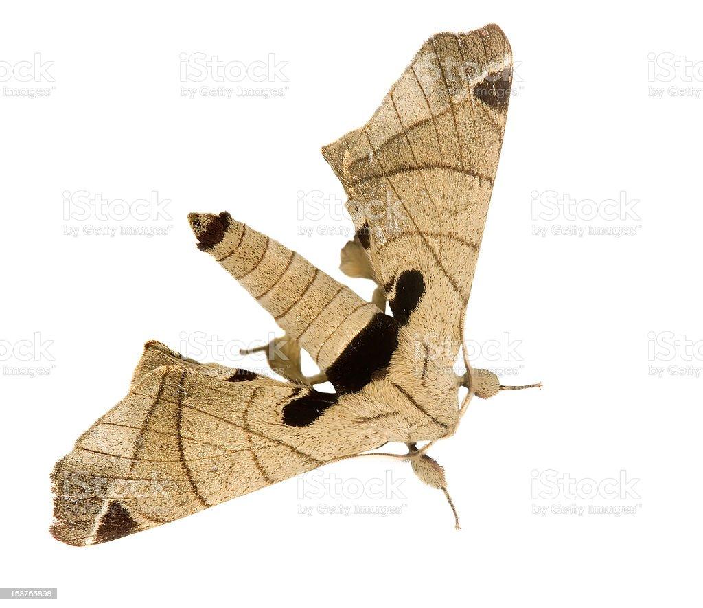 moth stock photo
