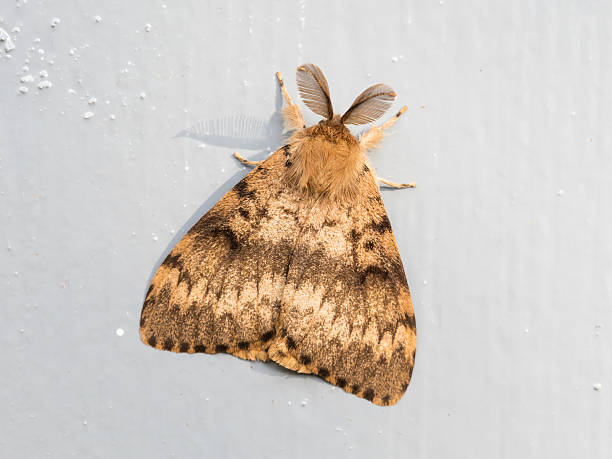 moth sitting still - mehlmotten stock-fotos und bilder