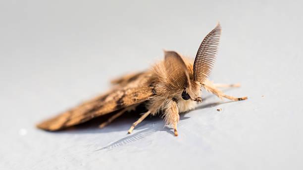 moth sitting still - selective focus - mehlmotten stock-fotos und bilder