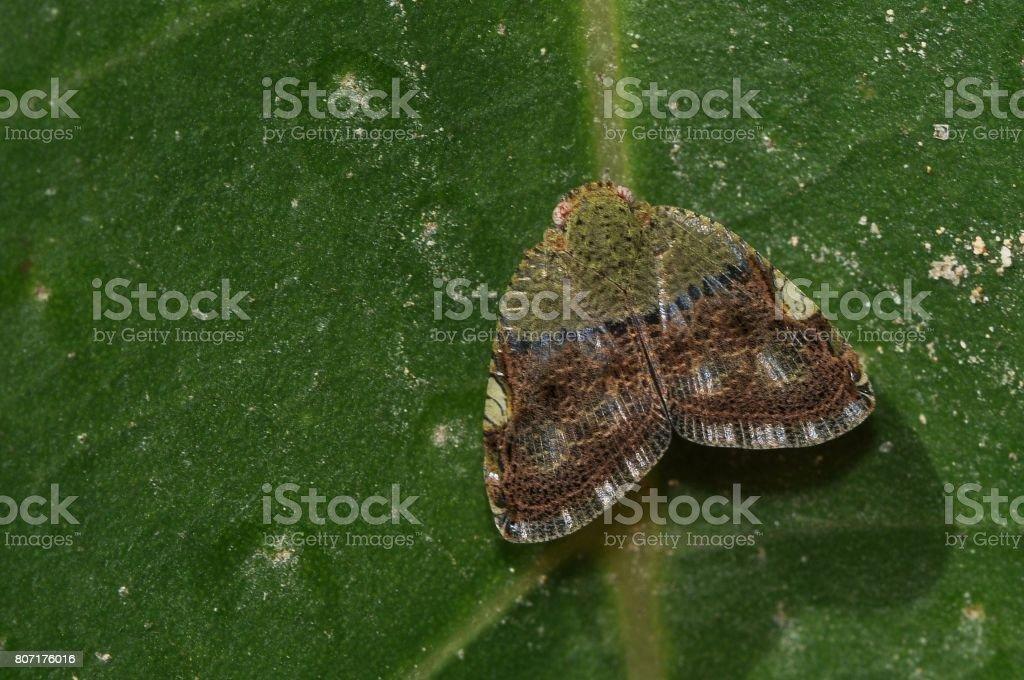 Moth species unidentified stock photo