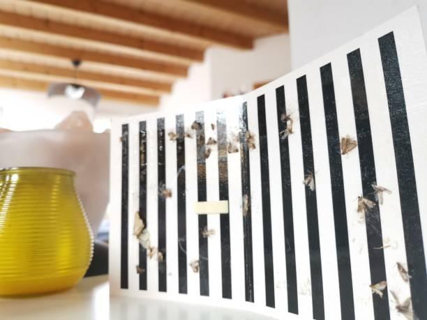 mottenfalle wird im deutschen wohnzimmer installiert - mottenfalle stock-fotos und bilder