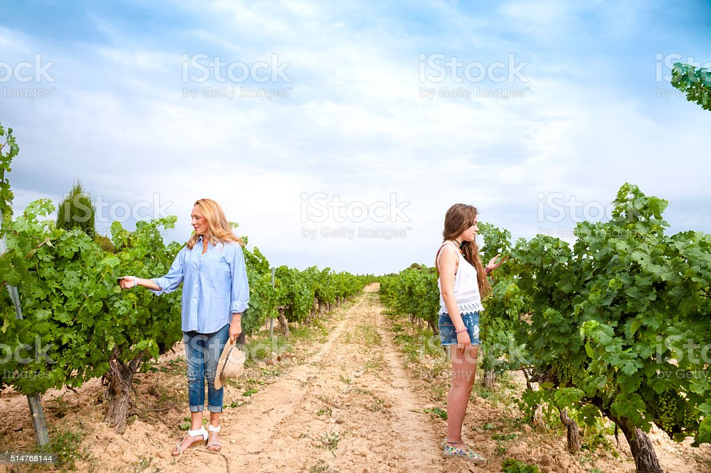 Mother and adul daugther couple harvesting grapes stock photo