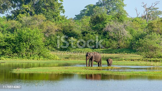Mother and baby elephant in Udawalawe National Park.