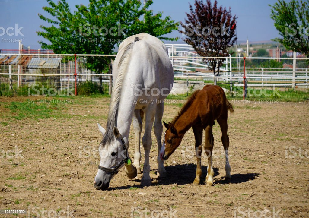 Mother And Baby Horse Stock Photo Download Image Now Istock