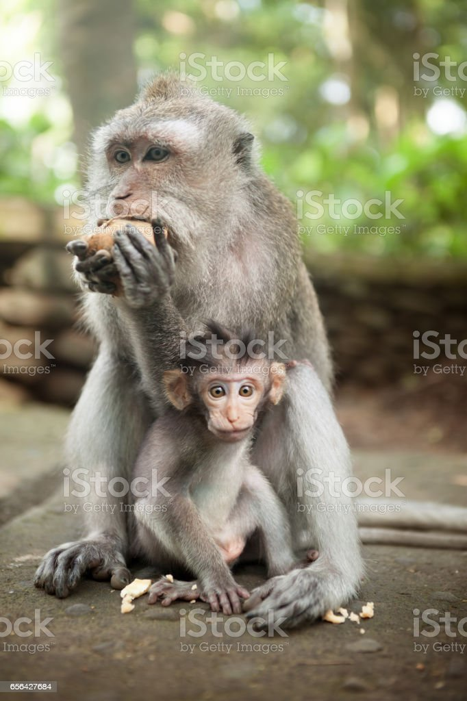 royalty free baby monkey pictures, images and stock photos - istock