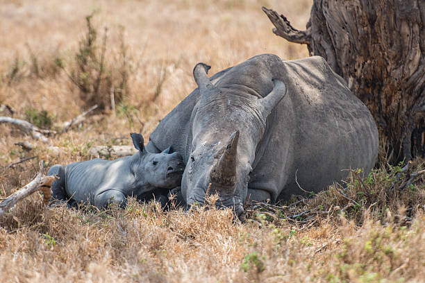 Mother and Baby Rhino in the Wild