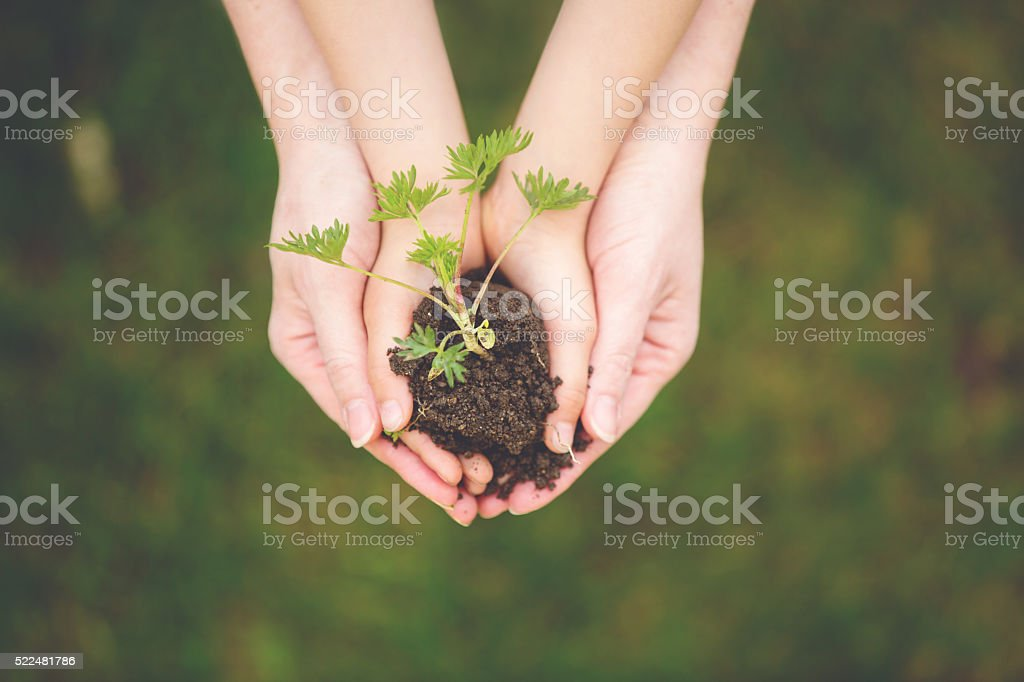 Mother and child hands, holding soil with fresh growing flower stock photo
