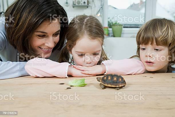 Mother and children feeding a tortoise picture id79123324?b=1&k=6&m=79123324&s=612x612&h=8xrxup3vxmr58q96hfvixtacjqq273f138yxh6ud658=