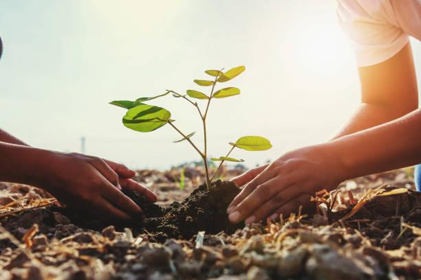 Mutter und Kinder helfen jungen Baum zu Pflanzen. Konzept grüne Welt – Foto