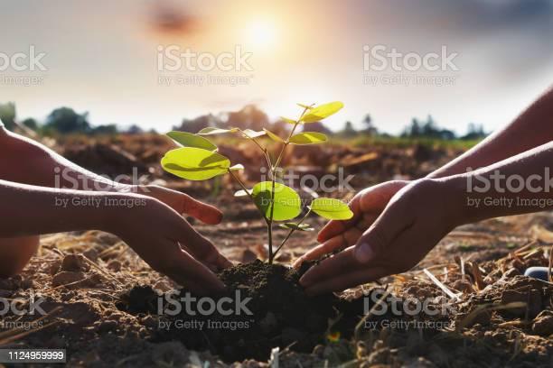 Mother and children helping planting young tree concept green world picture id1124959999?b=1&k=6&m=1124959999&s=612x612&h=ilbhozzqpsz t0jko wq2pyiidyxqghqxep k6 t yy=