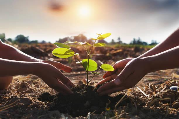 mother and children helping planting young tree. concept green world - лесистая местность стоковые фото и изображения