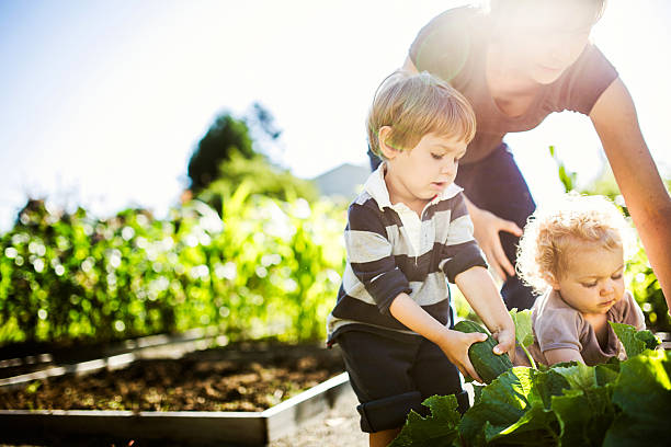 Mother and Children Picking Vegetables stock photo