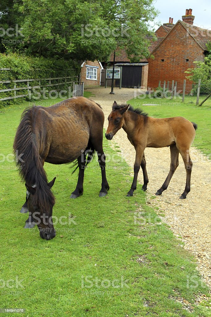 Mother and Colt royalty-free stock photo
