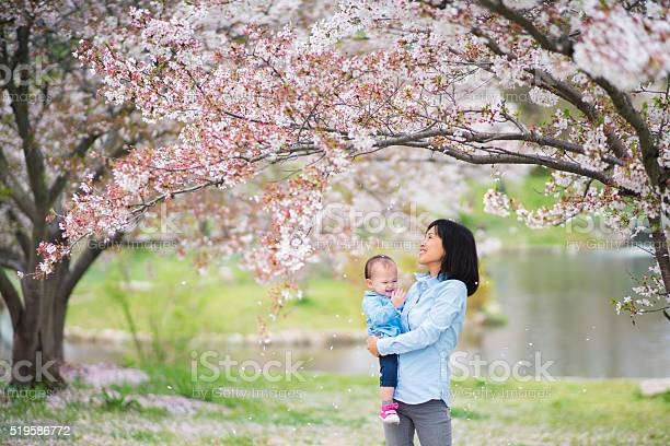 Mother and daughter enjoying the cherry blossoms picture id519586772?b=1&k=6&m=519586772&s=612x612&h=ytjxptjrjtwbu80jzejaomavmd3tccxksn36qmwhujy=