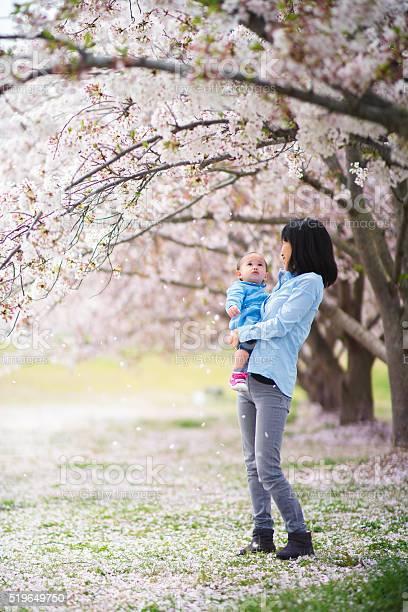 Mother and daughter enjoying the cherry blossoms picture id519649750?b=1&k=6&m=519649750&s=612x612&h=pt19nbatlx9b2lbt jtgerqbswnwexib1ikv4w b1lk=