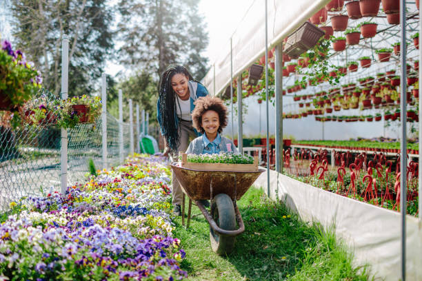 Mother And Daughter Gardening Mother and daughter having fun, mother riding her cute daughter in wheelbarrow. springtime stock pictures, royalty-free photos & images
