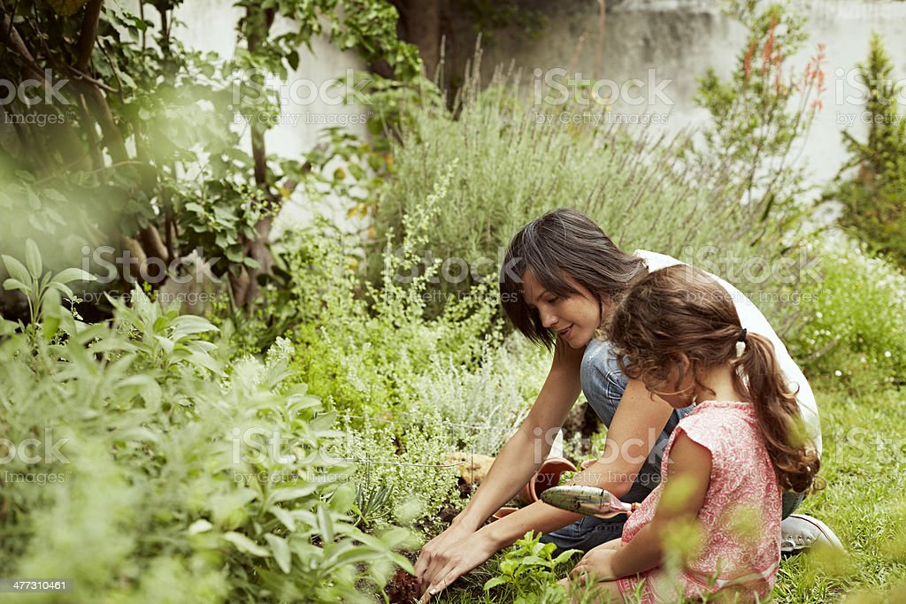 Mother and daughter gardening stock photo