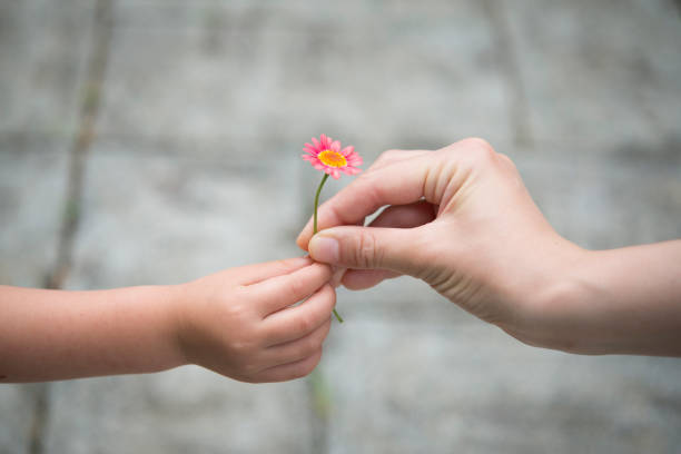 mother and daughter hand over pink flower - single flower stock pictures, royalty-free photos & images