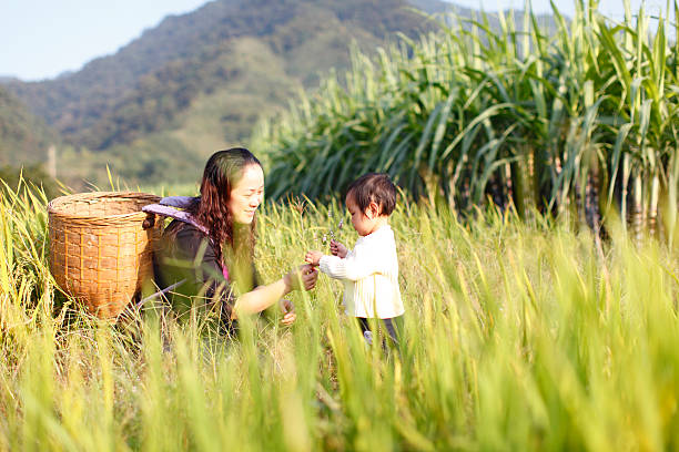 mother and daughter in the rice fields