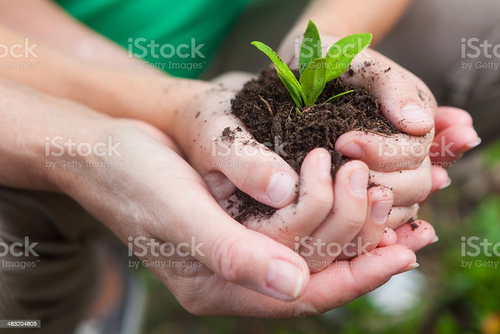 Mother and daughter planting green seedling plant; close-up of hands royalty-free stock photo