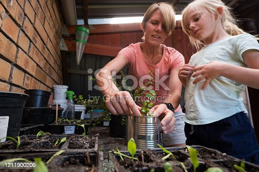 istock Mother and daughter planting out some succulent plants 1211900205