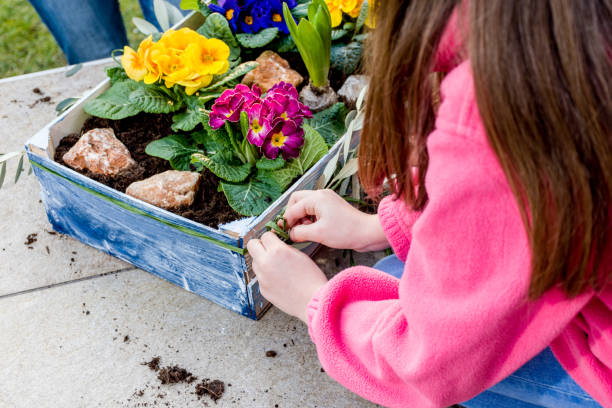Mother And Daughter Planting Spring Flower in Crate Mother And Daughter Planting Spring Flower in Crate primula stock pictures, royalty-free photos & images