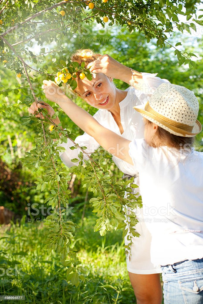 Mother and daughter standing near plum tree. stock photo