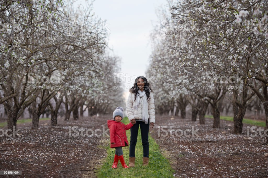 Mother and daughter together in blossom almond field. stock photo