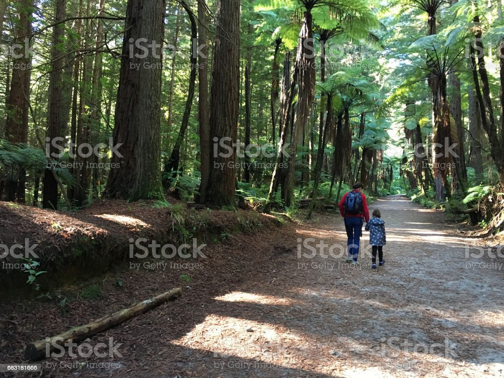 Mother and daughter travel and hikes in Giant redwood forests New Zealand royalty-free 스톡 사진