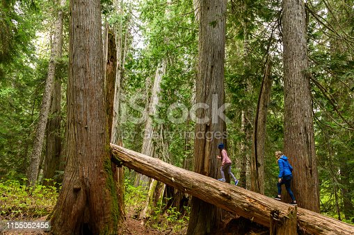 Mother and daughter walking on fallen cedar tree. Family is hiking in temperate rainforest. They are enjoying vacation together.