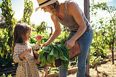 istock Mother and daughter with fresh vegetable in farm 1041926012