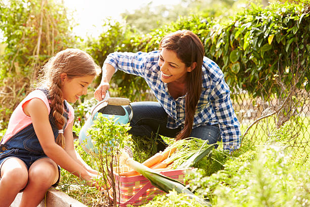 Mother And Daughter Working On Allotment Together Mother And Daughter Working On Allotment Together With Vegtables And Watering Can Smiling community garden stock pictures, royalty-free photos & images