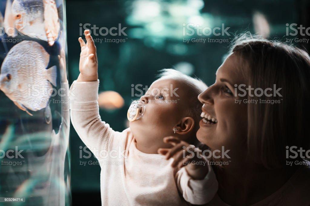 Madre y su hijo viendo vida marina - foto de stock