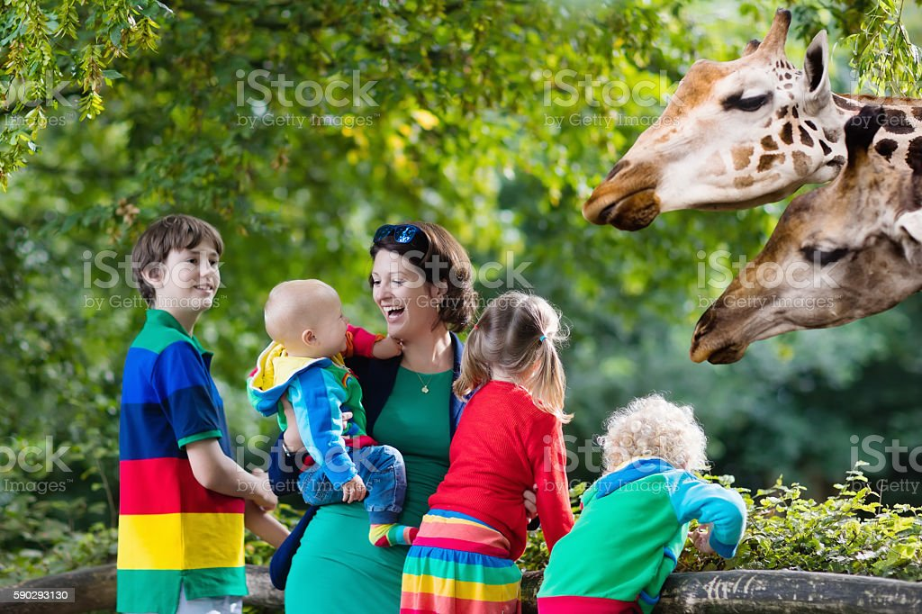 Mother and kids feeding giraffe at the zoo royaltyfri bildbanksbilder
