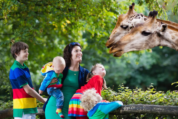 Mother and kids feeding giraffe at the zoo stock photo