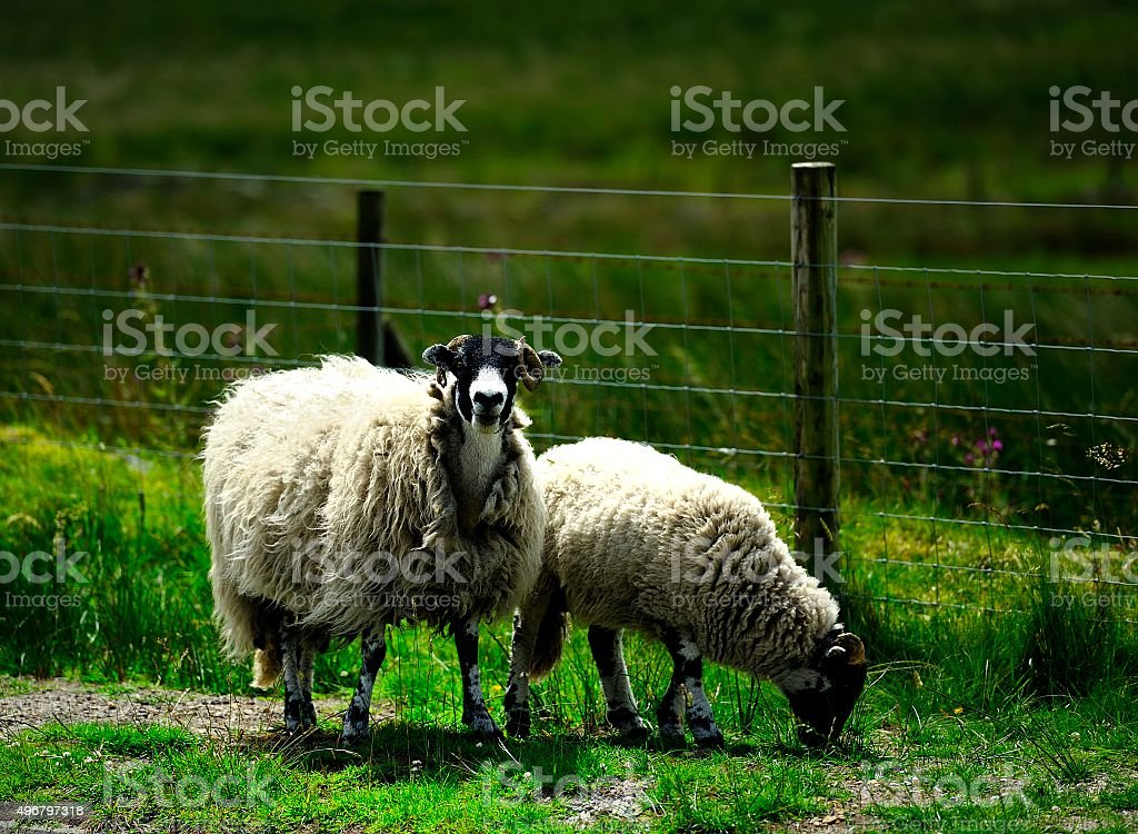 Mother and offspring stock photo