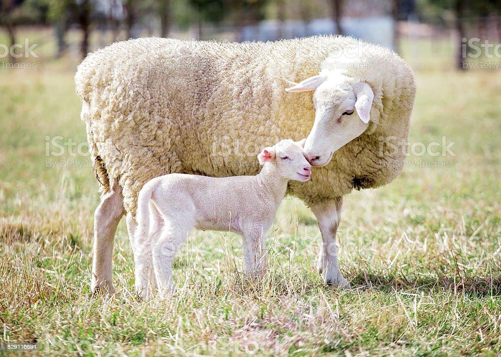 Mère et son fils de 2 - Photo