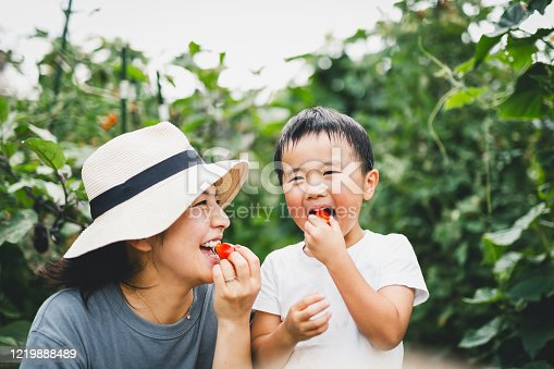 istock Mother and son eating tomato in the fields 1219888489