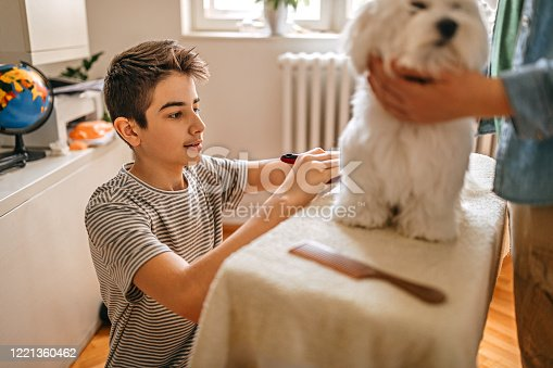 Mother and son grooming pet Maltese dog at home