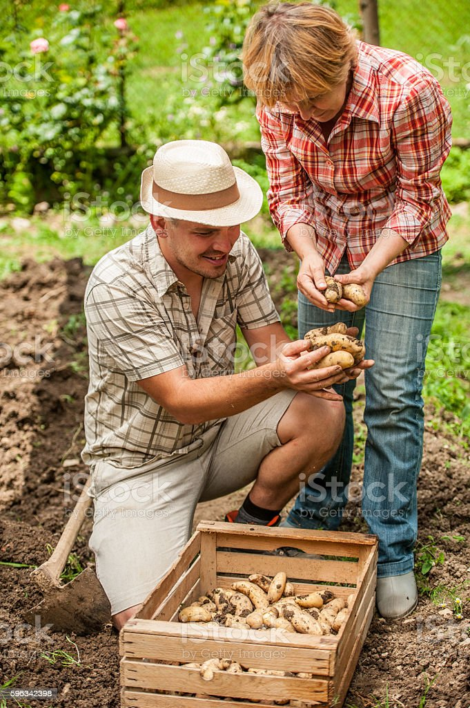 Mother and Son Harvesting Potato Lizenzfreies stock-foto