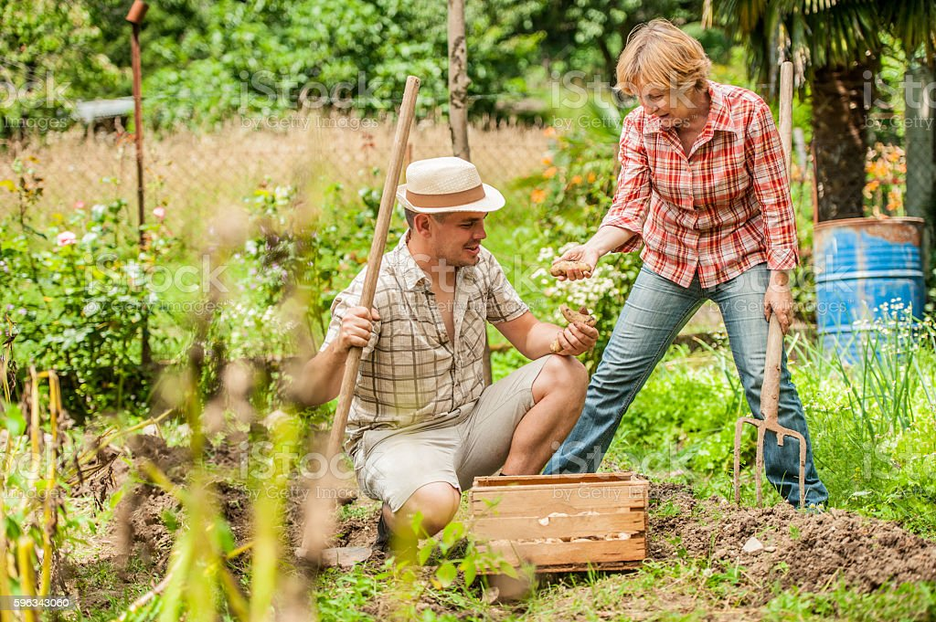 Mother and Son Harvesting Potato royalty-free stock photo