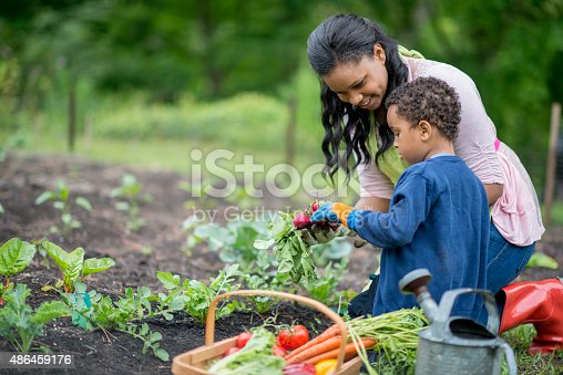 A mother and her son are kneeling next to their vegetable garden and are holding their freshly picked produce, next to them is a basket full of vegetables and a watering can.