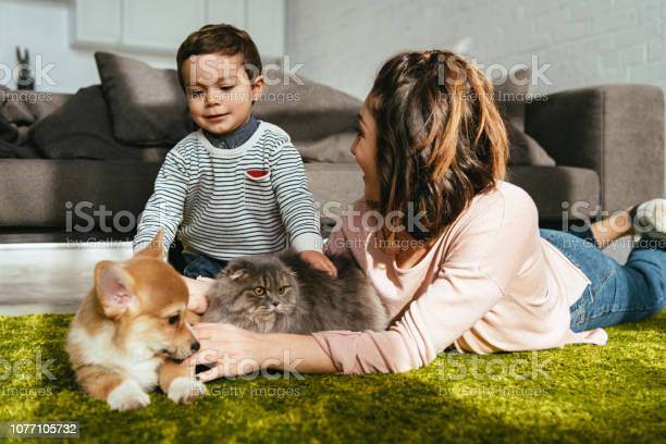 Mother and son laying on floor with dog and cat in living room at picture id1077105732?b=1&k=6&m=1077105732&s=612x612&h=kw6a7tvsy7ob0eev 6815c8tqcr2t5 bgbs4xqfainu=