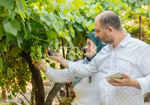 1063236916 istock photo Mother and son taking pictures of green grapes 1180200229
