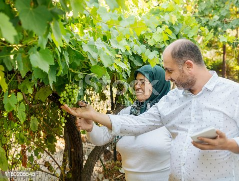 1063236916 istock photo Mother and son taking pictures of green grapes 1180205545